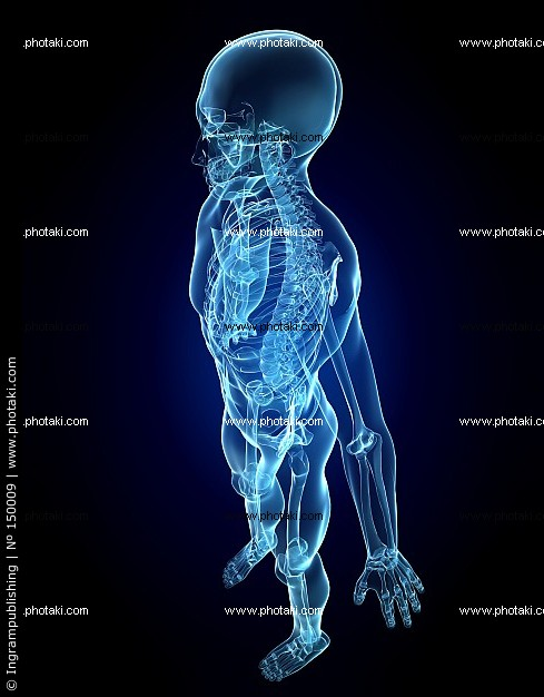 human-skeleton-bones-xray-bone-xray_150009